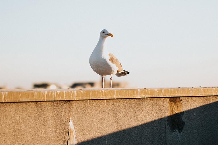 siatka-zabezpieczajaca-przeciw-ptakom