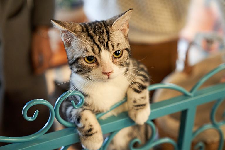 zabezpieczenia-balkonu-siatka-na-ptaki-koty